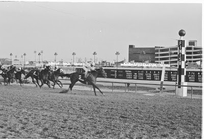 photo horse race