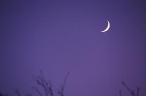 waxing crescent moon purple