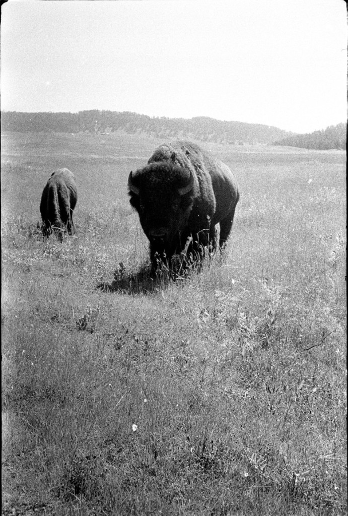james 3 - South_Dakota._1967.first_Buffalo_
