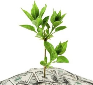 plant from money crop