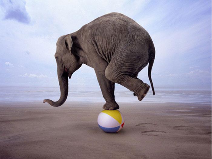 Balancing act elephant