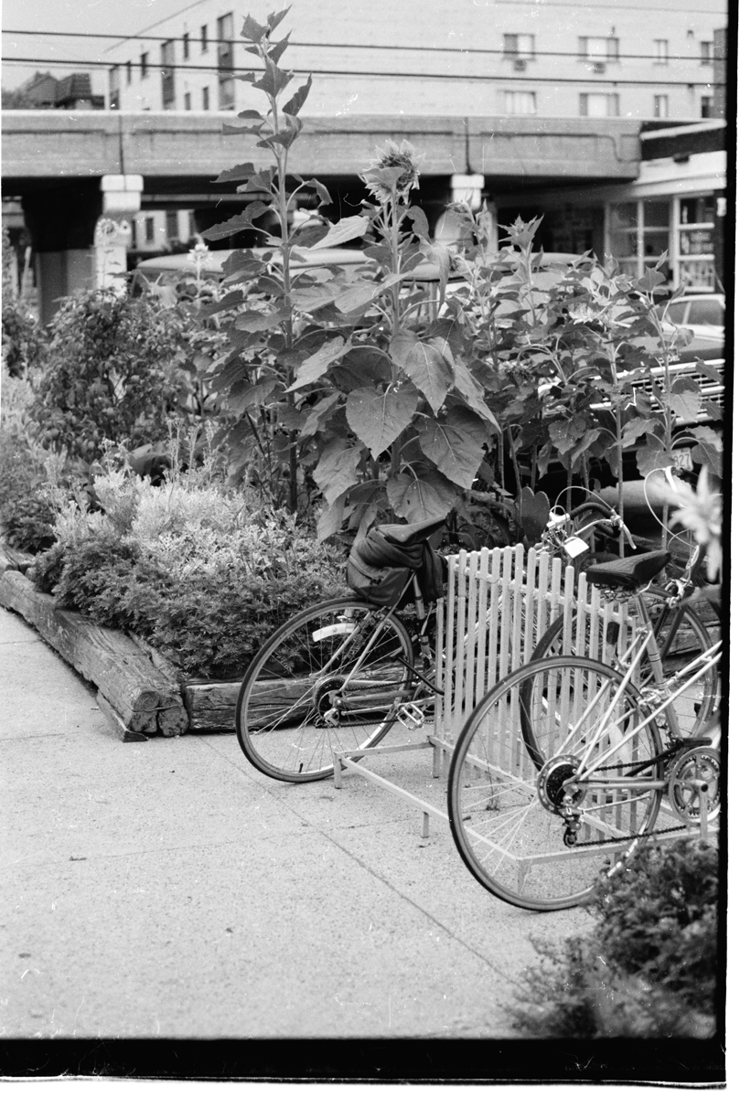 James 28 - 1983 Summer, bike rack, sunflower, HC 2