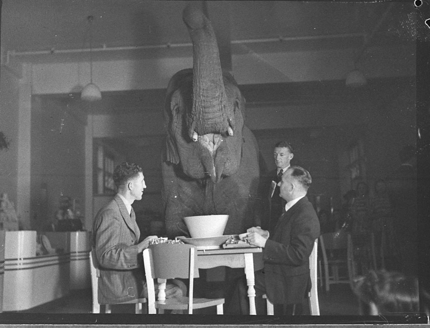 Harry Targ : Foreign policy: The elephant in the room | The Rag Blog