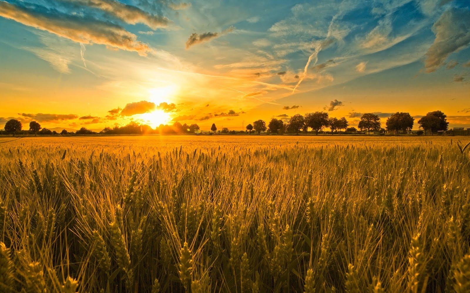 Kate Braun : Lammas is the First Harvest